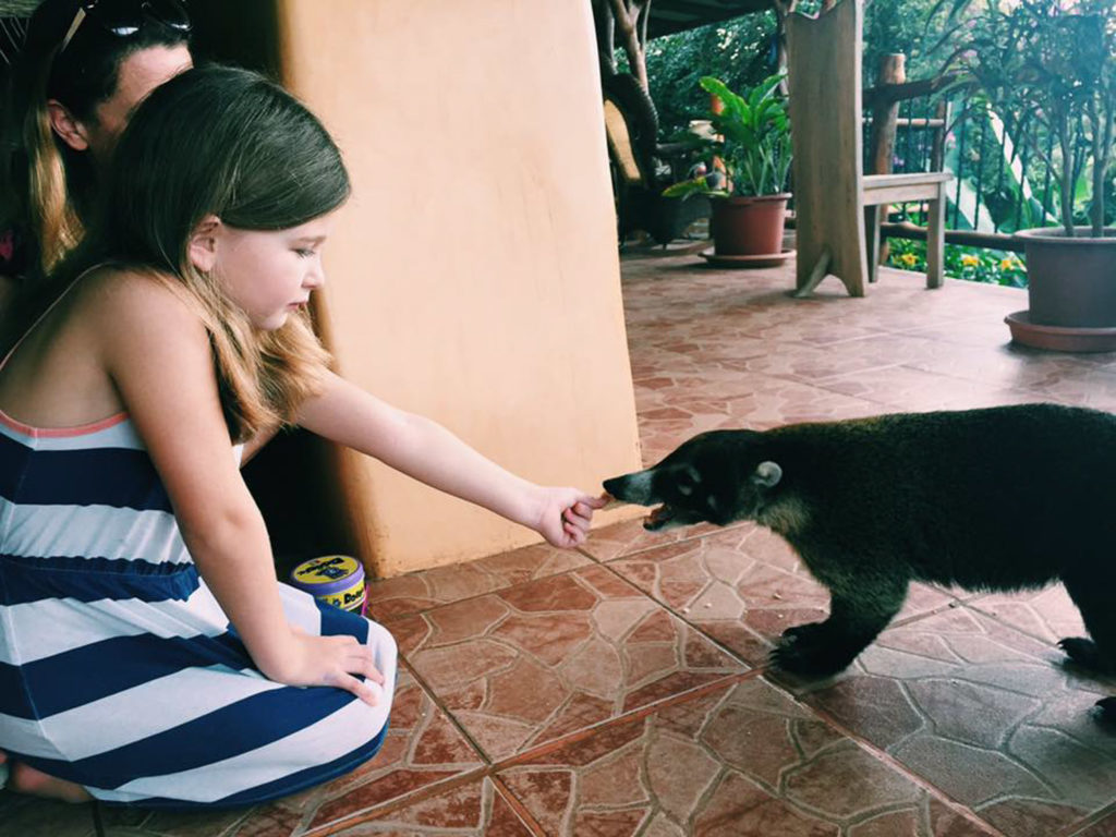 feeding coatis at villa mango b&b playa pelada nosara